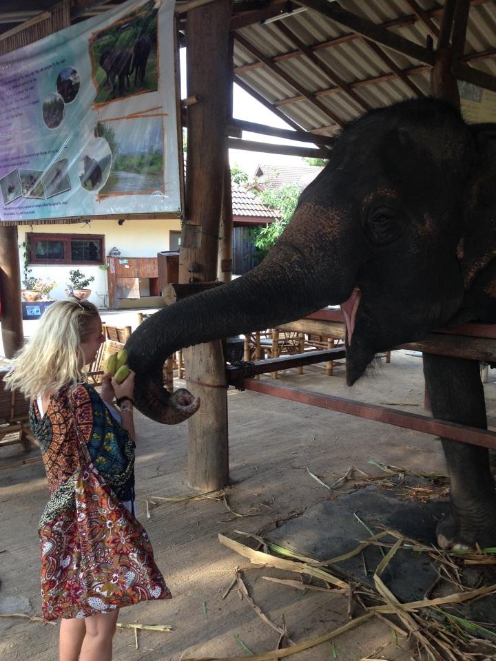 elephant-chiangmai