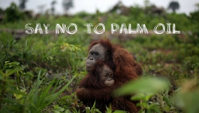 Why should we avoid palm oil?