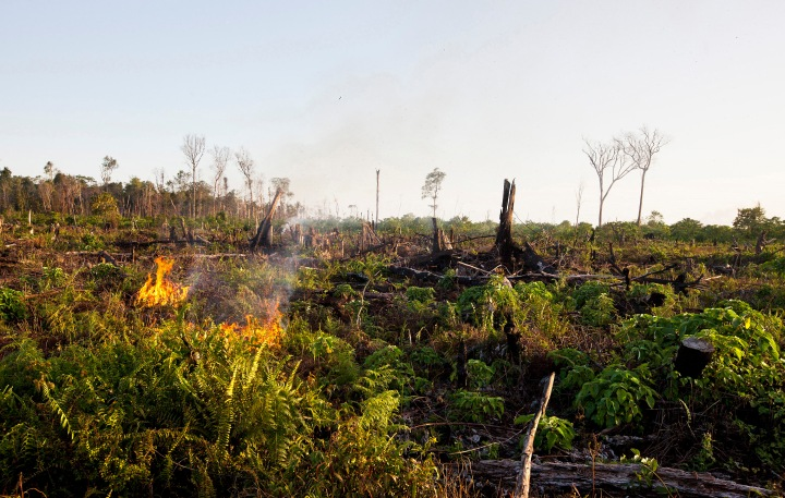 Tripa-rainforest-burns-2012-SOCP
