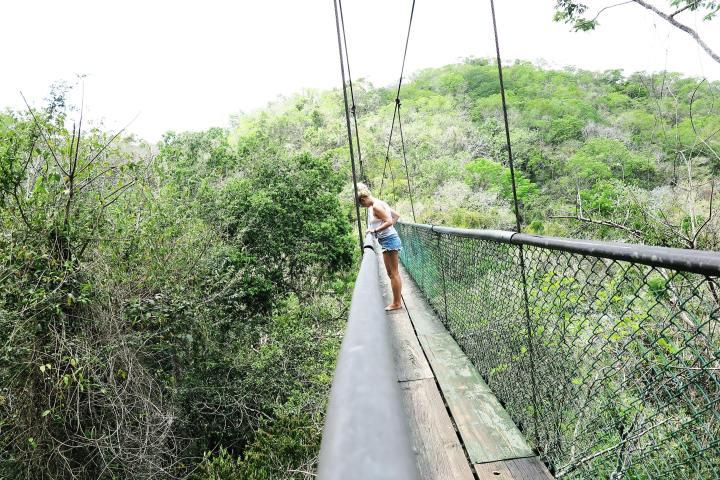 Jungle-Guatemala